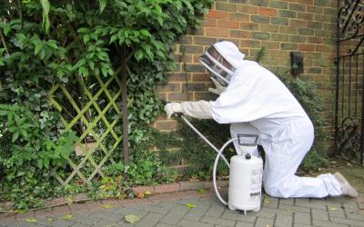 removing a wasps nest