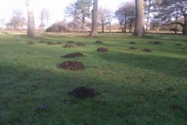 mole control in garden