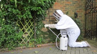 pest control in east grinstead
